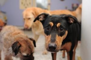 Humane Society Dogs Awaiting Adoption